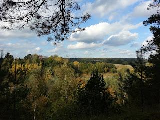 Foto über den Mischwald, in der Ferne ist der Bungsberg zu erkennen.