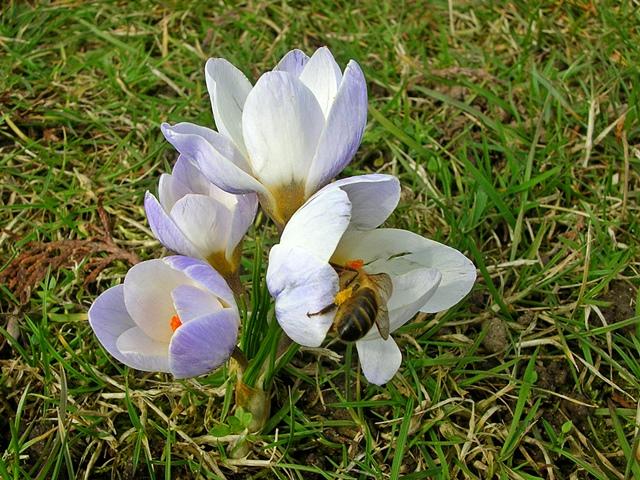 trawa, wiosna, owad, kwiat