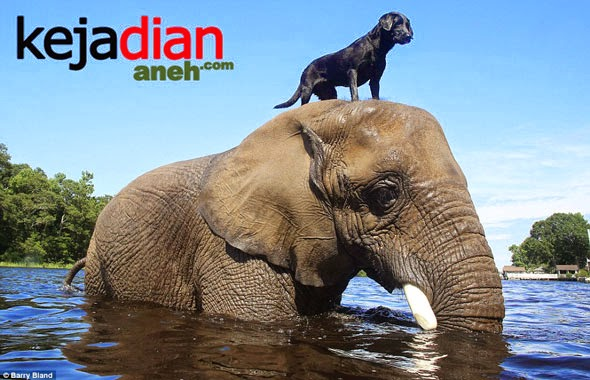 Uniknya Persahabatan Anjing Dan Gajah