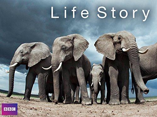 Life Story - Season 1