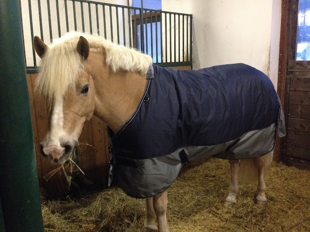 Horsey Problems: Blankets are Horses' Pair of Jeans