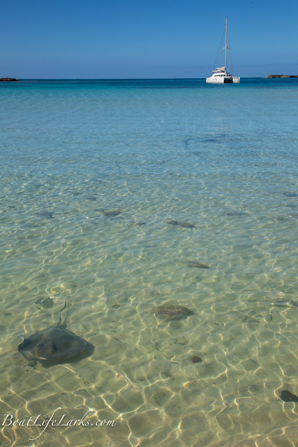 Stingrays at Honeymoon Harbor, Gun Cay, Bimini Islands, Bahamas