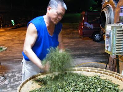 紅水烏龍茶 製作