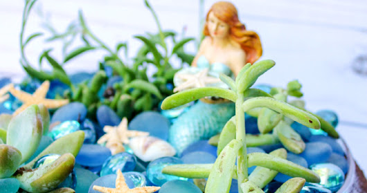 Make a Mermaid Garden with Succulents