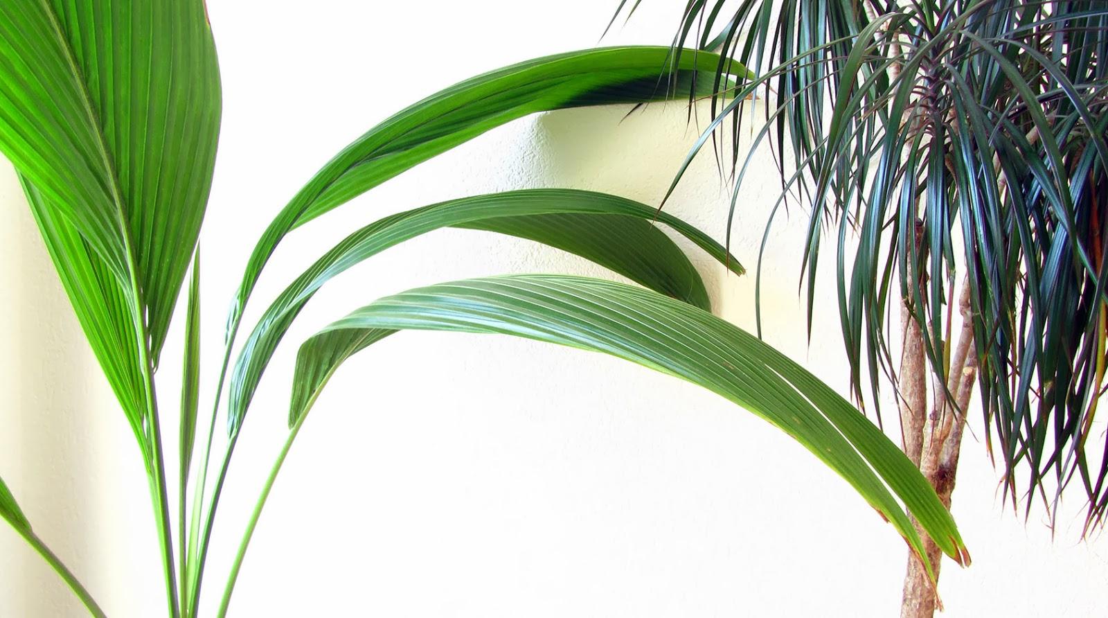 Plantas en casa_ameiseblog