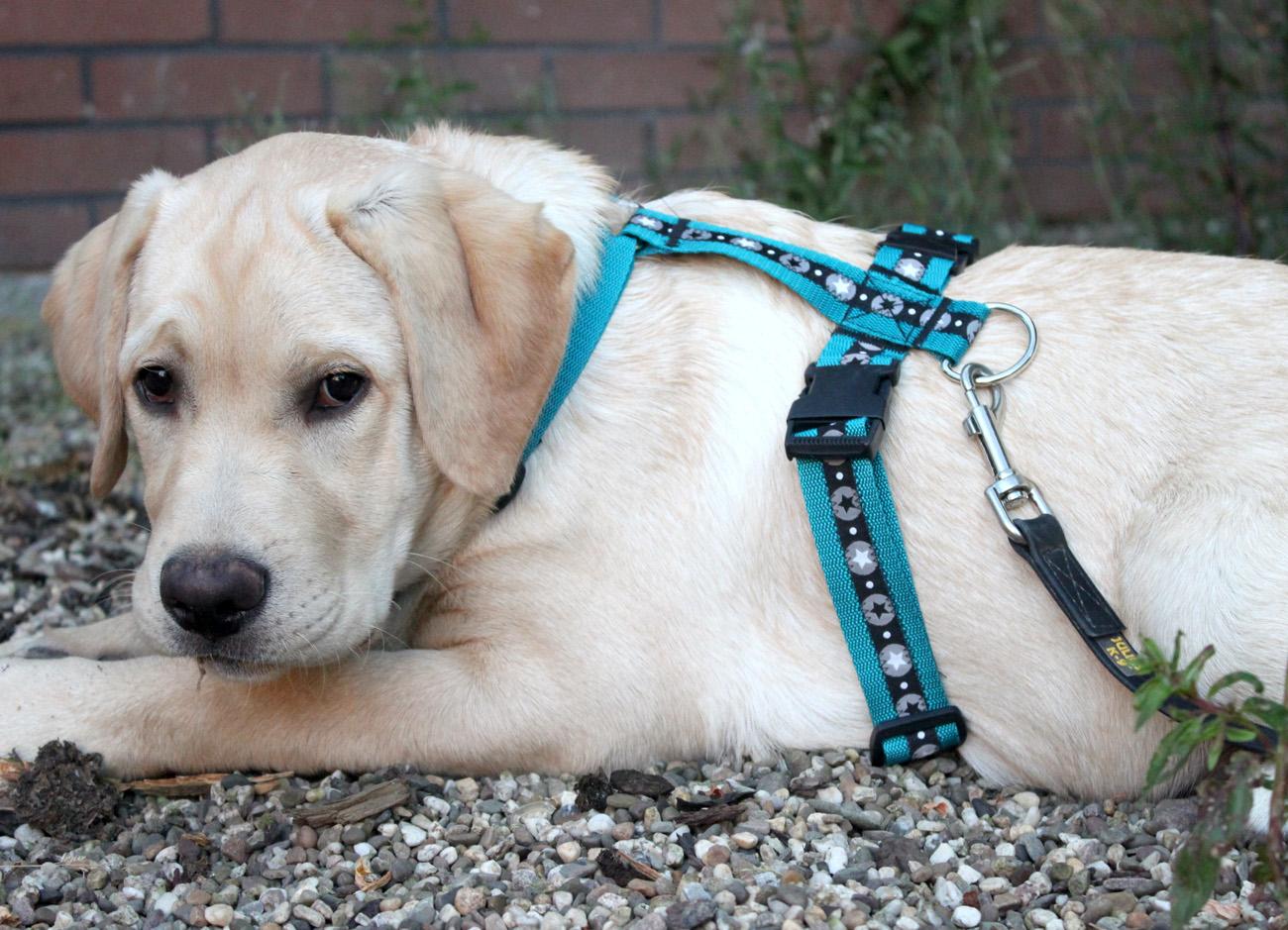 Gemütlich Hundevorlagen Zum Nähen Bilder - Beispiel Anschreiben für ...
