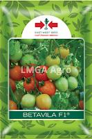 benih tomat betavila,tomat betavila,budidaya tomat,tanaman tomat,lmga agro