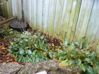 Toronto Gardening Services Bedford Park Backyard Fall Clean up before by Paul Jung