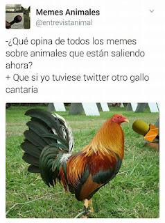 otro gallo cantaría