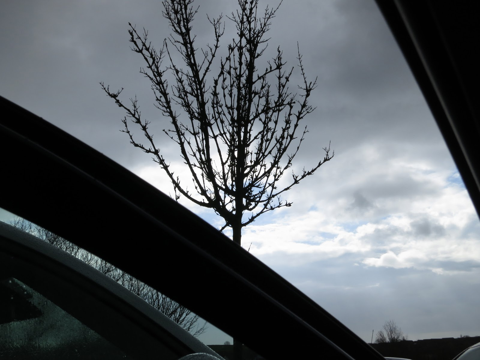Young tree seen through car door, silhouetted against dark and cloudy sky.