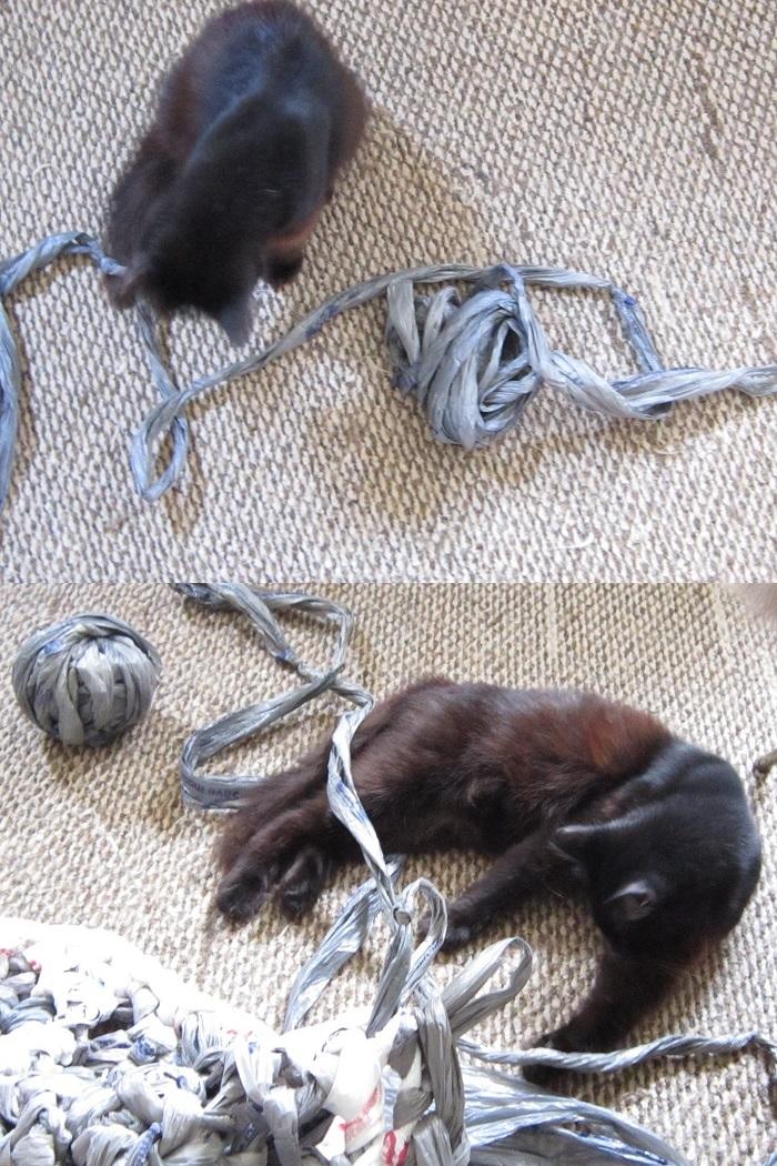 crochet, plarn, plastic yarn, rug, cats