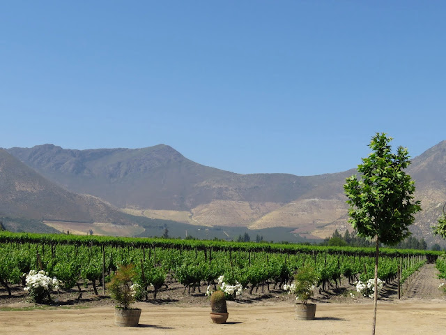 Day trips from Santiago: Sanchez de Loria vineyard