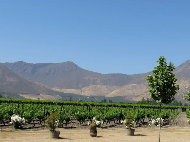 Day trips from Santiago: Sanchez de Loria vineyard