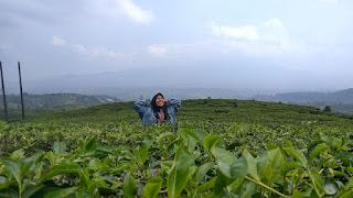 Shinrin-Yoku : Menghilangkan Stress dengan Pergi ke Hutan
