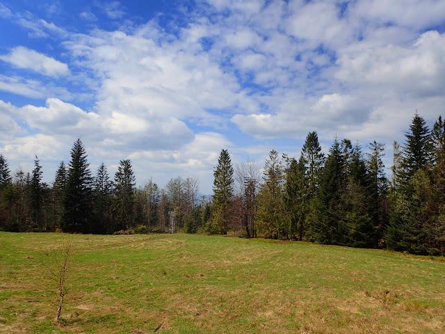 Widok na polanę Cechówka w Beskidzie Wyspowym (maj 2019)