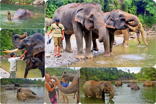 Mandi Gajah