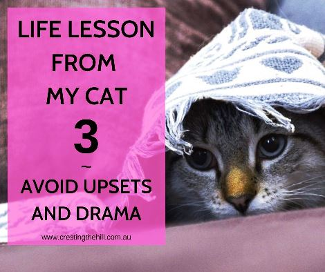 Life lesson learned from my cat include Lesson #3 - do what you can to lead a life free from upsets and drama #inspiration #lifelesson