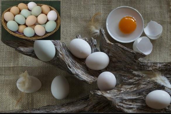 Inilah 5 Fakta Kuning Telur Bagi Kesehatan