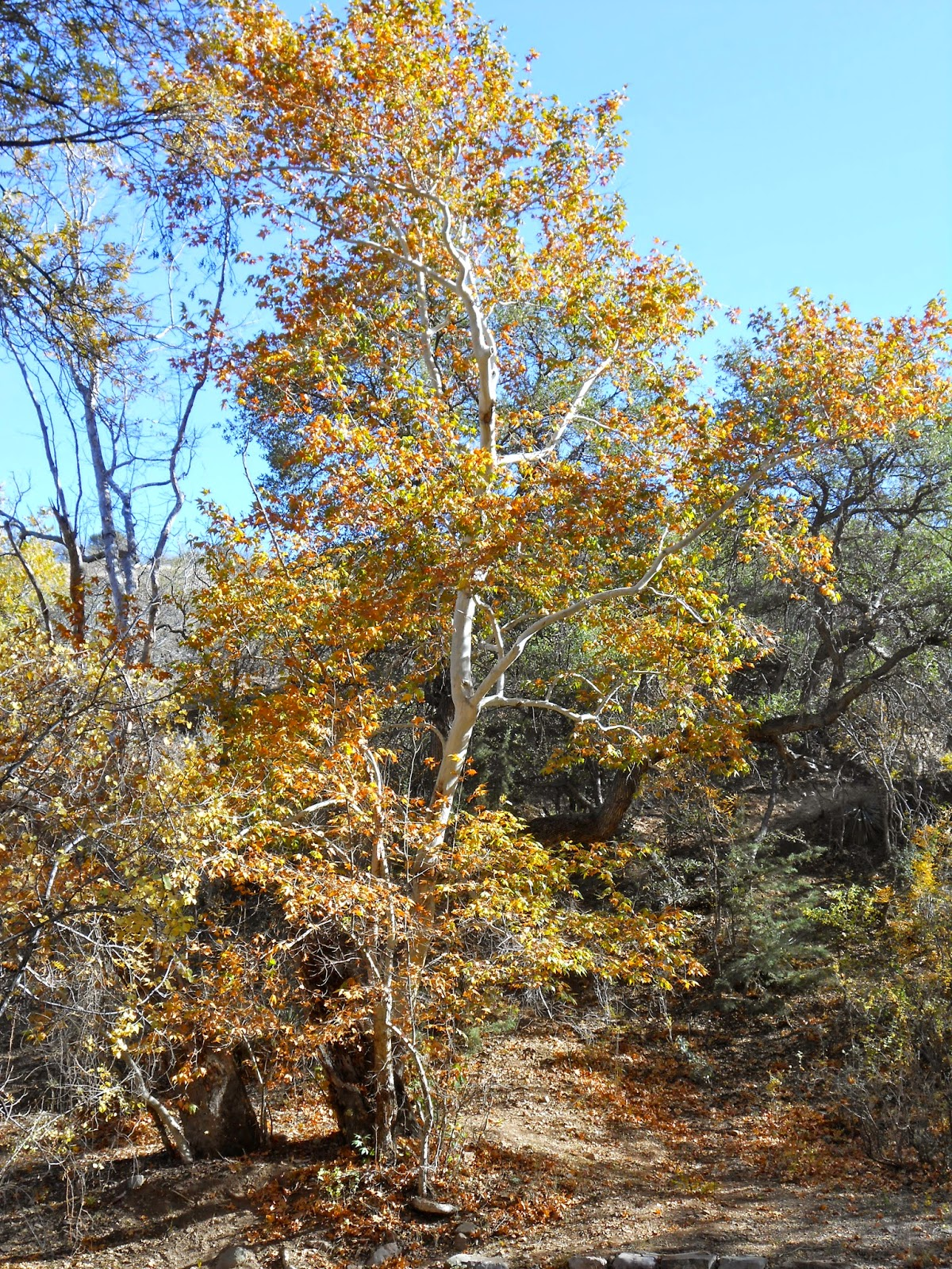 hiking near peppersauce cave oracle arizona catalina mountains in the fall