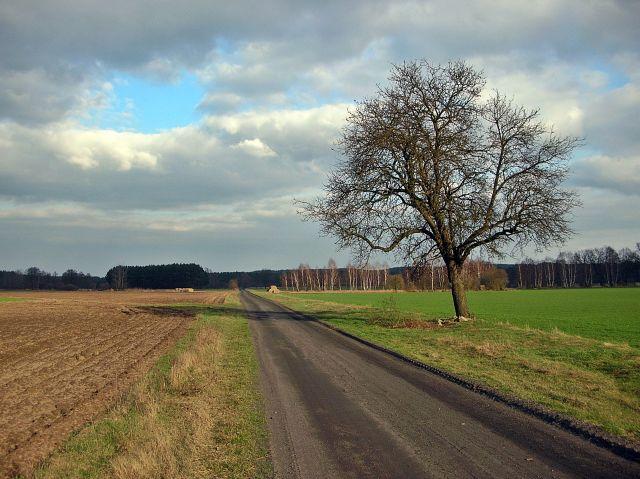polna droga, samotne drzewo