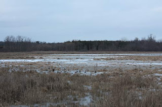 Frozen Marsh.