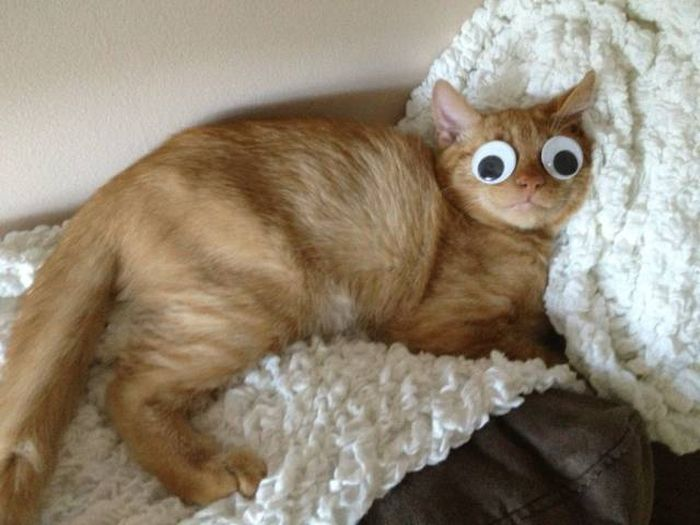 Funny cats - part 304, best cat picture, funny cat, cat photo