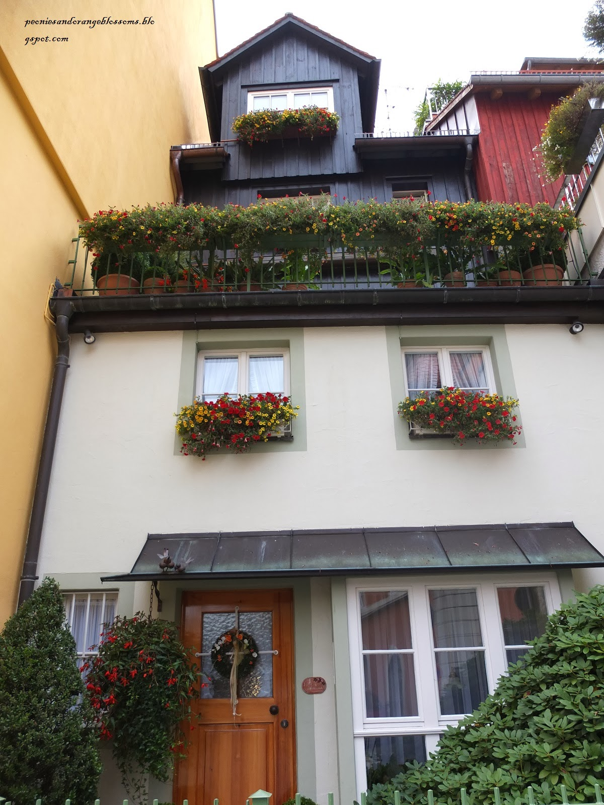 Balcony Geraniums in European Window Boxes - Peonies and Orange Blossoms