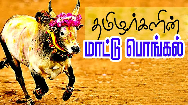 mattu pongal,pongal,mattu pongal celebration,mattu pongal whatsapp status,mattu pongal status,mattu pongal in tamil nadu,mattu pongal kolam,pongal kolam,mattu pongal wishes,tamil,maattu pongal,thai pongal,happy mattu pongal,mattu pongal whatsapp status in tamil,maatu pongal kolam,pongal wishes,news in tamil,mattu pongal tamil status,pongal whatsapp status,pongal in tamil nadu,tamil eelam thai pongal
