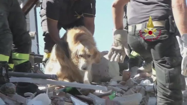 Perro que sobrevivió 9 días bajo los escombros fue recatado
