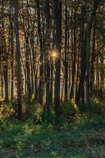Sulejówek Glinianki jesienny pejzaż