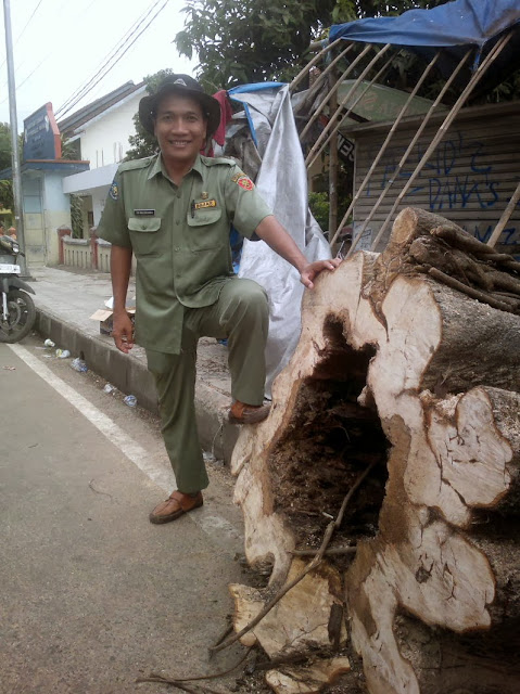Pohon tumbang bisa membahayakan pengguna jalan.
