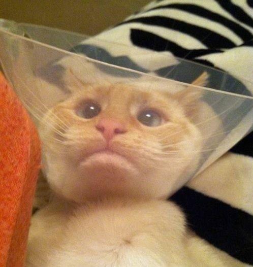 愛貓網: 公貓母貓結紮時間大不同!貓咪結紮前一定要知道的小常識