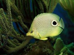fondali e pesci 5