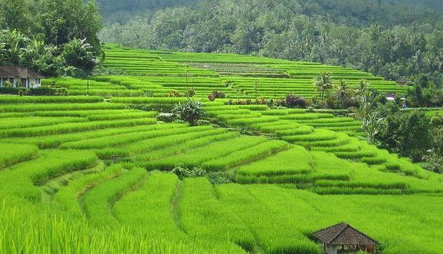 Pertanian Indonesia Menjadi Sorotan Dunia Maulana Says Green 3
