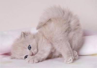gatito maromas