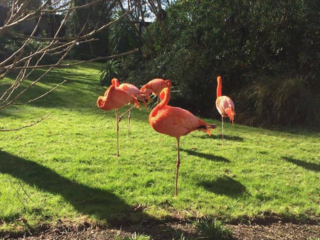 Flamingos Paradise Park