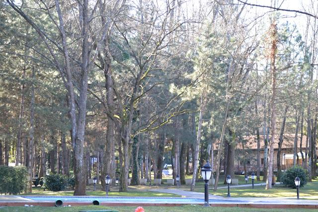 Bahçedeki ağaçlar, Güral Sapanca Wellness Park, Sapanca