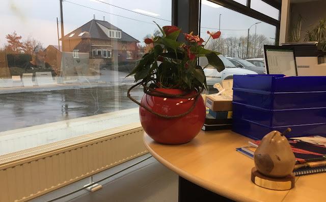 Bloemen of snijbloemen huren voor feest event of bedrijf (wekelijks, tweewekelijks of maandelijks) bedrijven feesten evenementen in Hasselt Genk Leuven