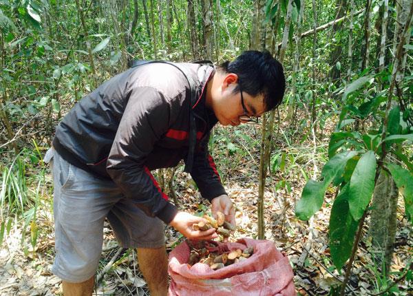 Rộ tình trạng lùng sục cây máu chó, cây cu li bán sang Trung Quốc