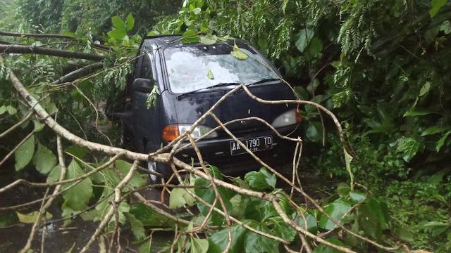 Mobil pick up tertimpa pohon