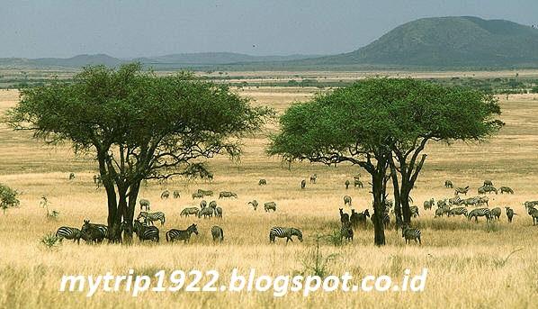 Wisata Padang Rumput Sabang di Tanzania Afrika