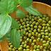 ciri-ciri kacang hijau