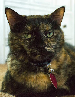 Portrait of Paisley, tortoisehell cat
