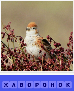 в траве сидит птица жаворонок