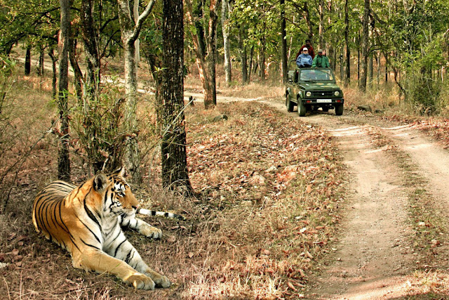 Bandhavgarh-National-Park-Adventure
