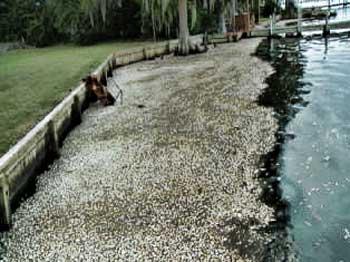 Masiva muerte peces Carolina