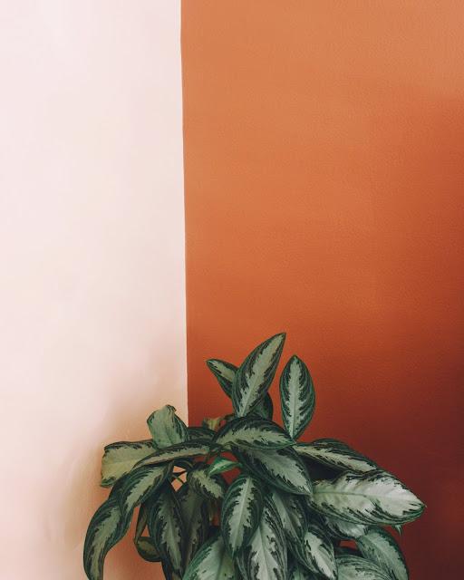 Mère & plants addict