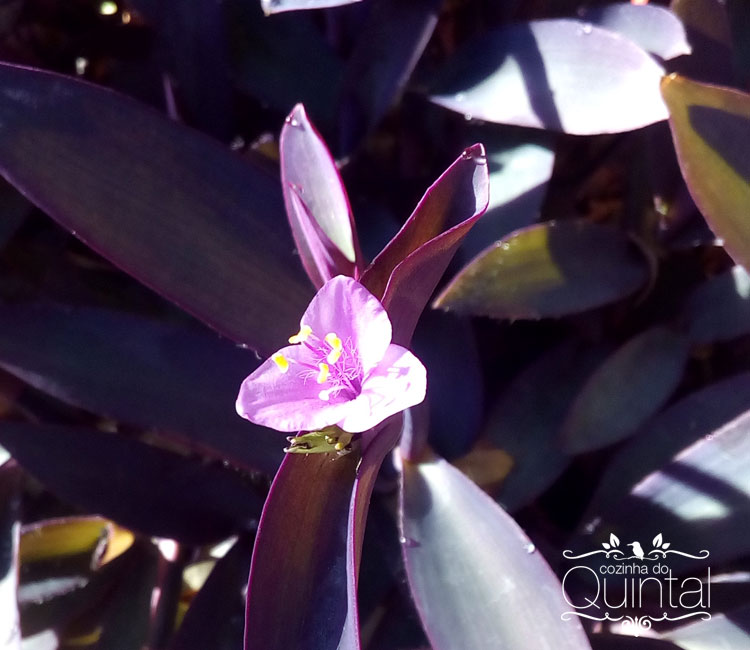 É uma forração, mas não sei o nome. As flores são pequenas e delicadas.