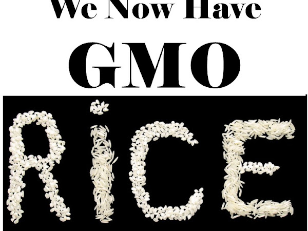 We Now Have GMO Rice