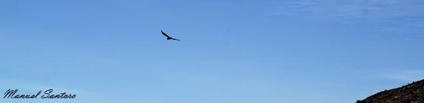 Colca Canyon, il condor volteggia sulle nostre teste
